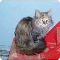 Adopt A Pet :: Tess - Hamburg, NY