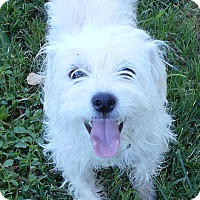 Adopt A Pet :: Butch - Oberlin, OH