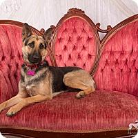 Adopt A Pet :: Flirt - Salem, OR