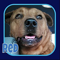 Adopt A Pet :: Red - Princeton, WV