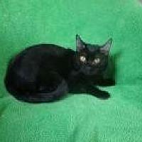 Adopt A Pet :: Evan - Sarasota, FL