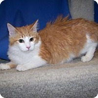 Adopt A Pet :: K-Apple5-Sallee - Colorado Springs, CO