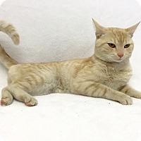Adopt A Pet :: Osborn - Mission Viejo, CA