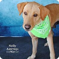 Adopt A Pet :: NELLY - Conroe, TX