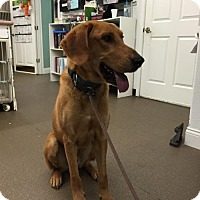 Adopt A Pet :: Beaux - Spring, TX