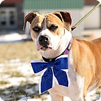 Adopt A Pet :: Remi - ADOPTED! - Zanesville, OH