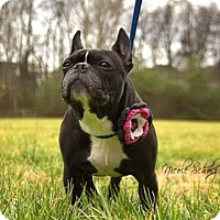 Adopt A Pet :: Ella Haskins - Thompson's Station, TN