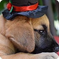 Adopt A Pet :: Silvio - Baton Rouge, LA