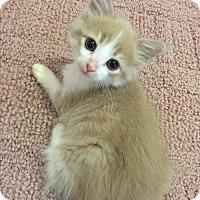 Adopt A Pet :: Bronx - Mount Laurel, NJ