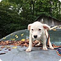 Adopt A Pet :: Jena - Hohenwald, TN