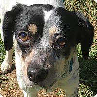 Adopt A Pet :: Sherry - Lexington, KY