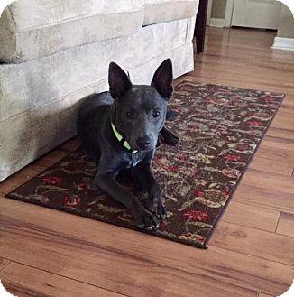 Cattle Dog Mix Dog for adoption in Summerville, South Carolina - Rupert