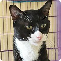 Adopt A Pet :: Garbanzo - Salisbury, MA