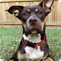 Adopt A Pet :: Gia - Memphis, TN
