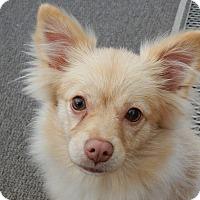 Adopt A Pet :: Ivory - Long Beach, NY