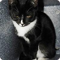 Adopt A Pet :: Robin - Henderson, NC