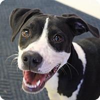 Adopt A Pet :: Oreo - Claremore, OK