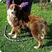 Adopt A Pet :: Boney - Lisbon, OH