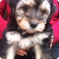 Adopt A Pet :: Jenny - Simi Valley, CA