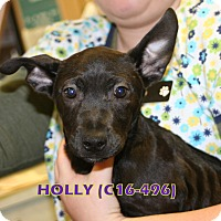 Adopt A Pet :: Holly - Tiffin, OH