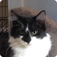 Adopt A Pet :: Hallow - San Diego, CA