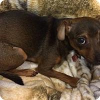 Adopt A Pet :: Mac - Newport, KY