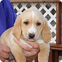 Adopt A Pet :: Tanner - Conesus, NY