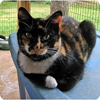 Adopt A Pet :: Barbara - McDonough, GA
