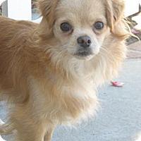 Adopt A Pet :: Hugo URGENT - San Diego, CA