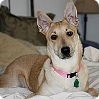 Adopt A Pet :: Addie - Flower Mound, TX