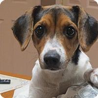 Adopt A Pet :: Paisley - Greenville, RI