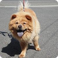 Adopt A Pet :: Simba - Sacramento, CA