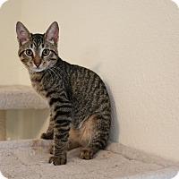Adopt A Pet :: Humphrey - Greensboro, GA