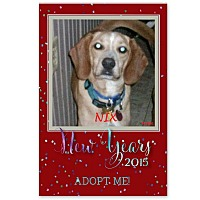 Adopt A Pet :: NIX - Ventnor City, NJ