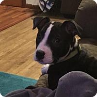 Adopt A Pet :: Emma - Brooklyn Center, MN