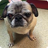 Adopt A Pet :: Millie - Tontitown, AR