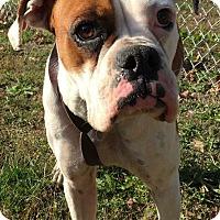 Adopt A Pet :: Nannie - Morehead, KY