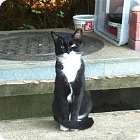 Adopt A Pet :: TUX - COURTESY POST - Baltimore, MD