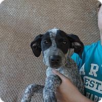 Adopt A Pet :: Kong - Oviedo, FL