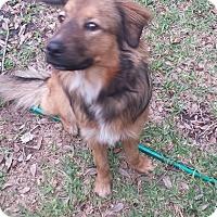 Adopt A Pet :: Keema - Houston, TX