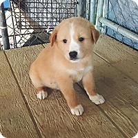 Adopt A Pet :: Beacon - Ruston, LA