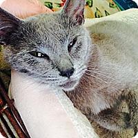 Adopt A Pet :: *mouser - Winder, GA