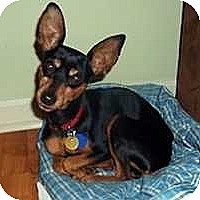 Adopt A Pet :: Izzy - Nashville, TN