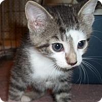 Adopt A Pet :: Friskies - Acme, PA