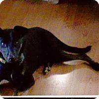 Adopt A Pet :: Curby - Sunbury, OH