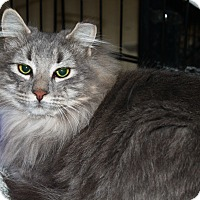 Adopt A Pet :: Gavin - North Branford, CT