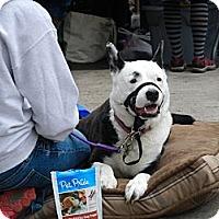 Adopt A Pet :: Whoopie - Troy, MI