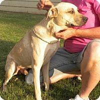 Adopt A Pet :: JERRY - Childress, TX