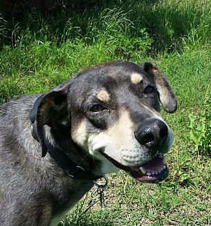 Rottweiler/Catahoula Leopard Dog Mix Dog for adoption in Van Alstyne, Texas - Woodsie