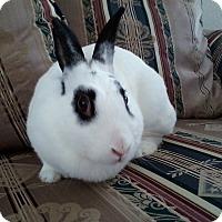 Adopt A Pet :: Pollyanna - Watauga, TX
